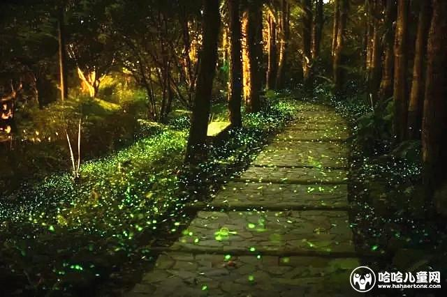 夜访萤火虫王国 观植捕鱼 创意树叶画~来一场仲夏夜艺术追光之旅吧!