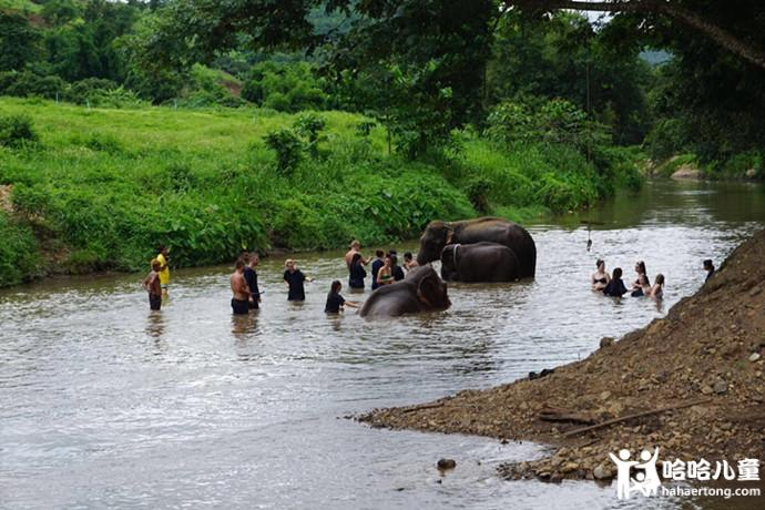 大象洗澡11.jpg