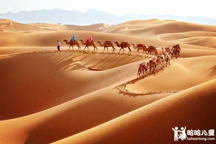 骆驼2.jpg