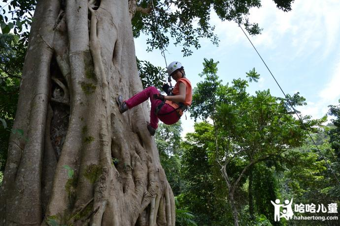 攀树-690.jpg