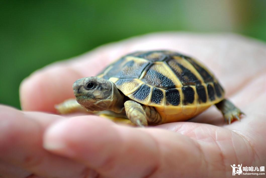 海龟2-1.jpg