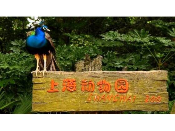 上海动物园第三届蝴蝶展免费入园啦!