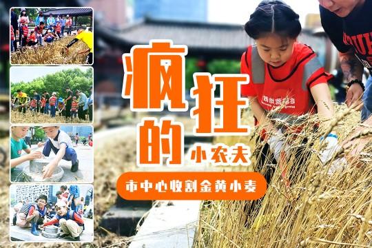 【割小麦】市中心收割金黄小麦,体验农事,分辨五谷,做个疯狂的小农夫!