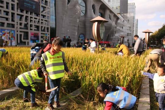 市中心收割黄金水稻做个疯狂小农夫!2人拼团只要98元/人