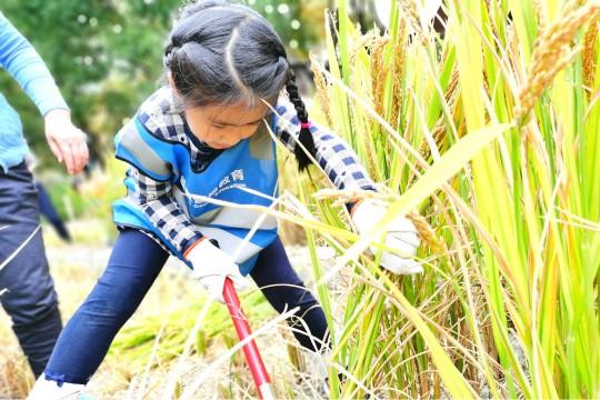 画草帽+割水稻+古法做米粉+研学宝盒,做个疯狂的小农夫!