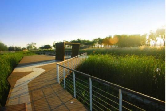 【自然探索-湿地密码】走进市内湿地公园,感受水生态净化,做水源净化实验!