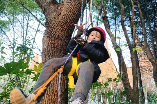 攀树技能训练营,像人猿泰山那样飞跃丛林!